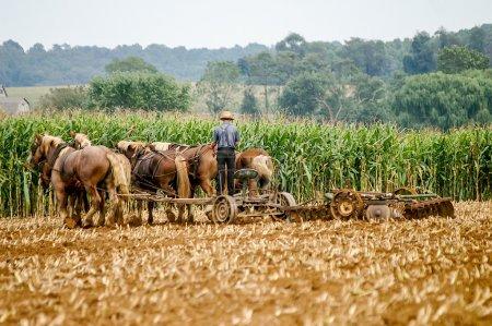 Photo pour Un agriculteur amish laboure ses champs avec une charrue traditionnelle tirée par des chevaux au lieu d'un tracteur dans le pays des Amish en Pennsylvanie rurale . - image libre de droit