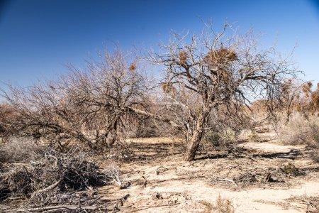 Photo pour La sécheresse affecte également des paysages désertiques, détruisant ce que floar peu a réussi à s'adapter à l'environnement hostile. - image libre de droit