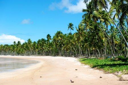 Paradise Brazilian Beach