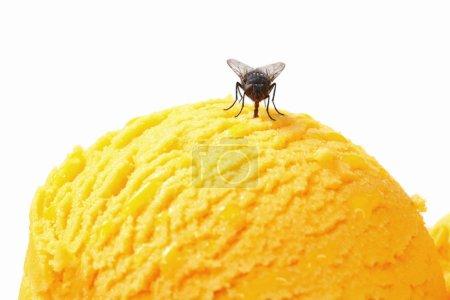 Fly on ice cream