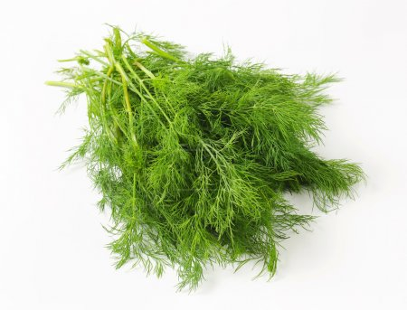 Photo for Sprigs of fresh dill weed - Royalty Free Image