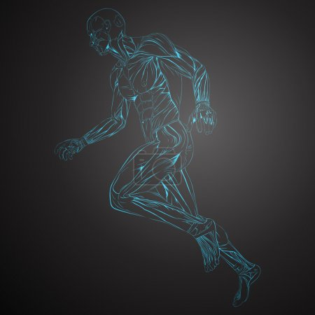 Illustration for Vector Illustration of Human Muscle Anatomy - Royalty Free Image