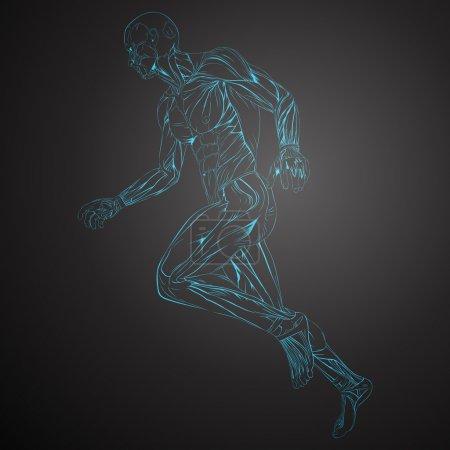 Illustration pour Illustration vectorielle de l'anatomie du muscle humain - image libre de droit