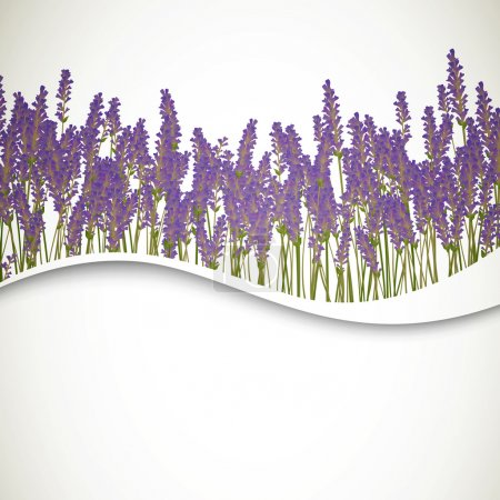 Illustration for Vector Illustration of a Lavender Background - Royalty Free Image