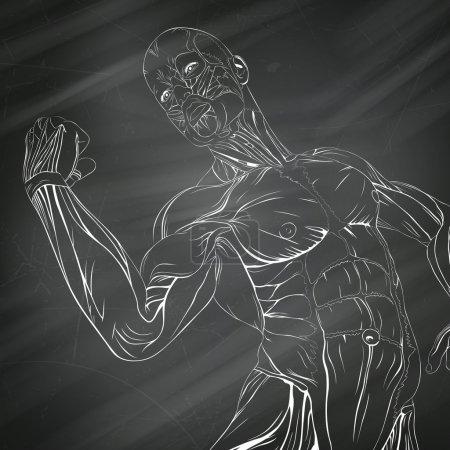 Vector Human Muscle Anatomy