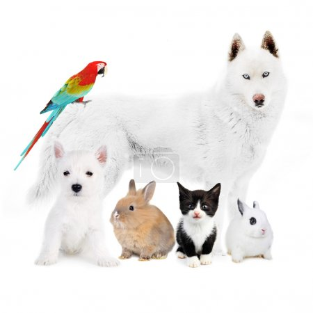 Dogs,cat, bird, rabbits - in front of a white...