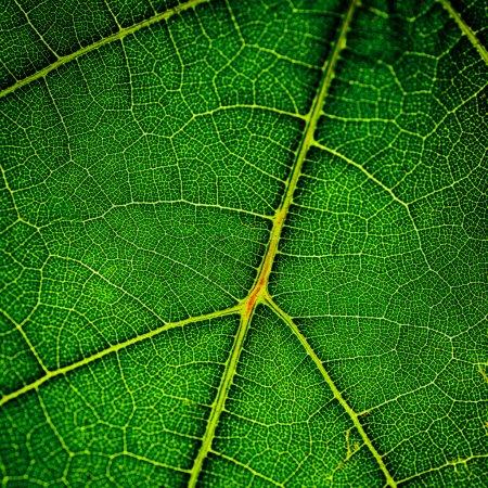 Photo pour Feuille verte très près - image libre de droit