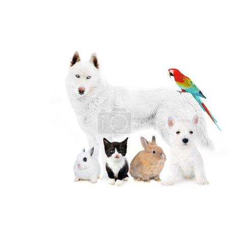 Dogs,cat, bird, rabbits