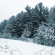 Forest covered with snow. winter landscape....