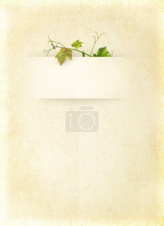 Photo for Wine list menu with grapes green leafs on the old blank paper. Vintage background for the wine poster on textured old parchment. - Royalty Free Image