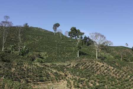 The Coffee Belt, also called Coffee Triangle in Colombia.