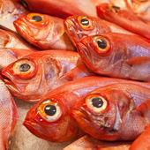 Mořských ryb na LED
