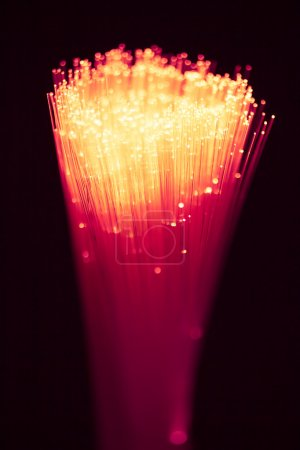 Fiber optics bunch