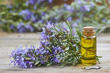 Photo for Rosemary essential oil in a small glass vial and plant with flowers on a wooden background - Royalty Free Image