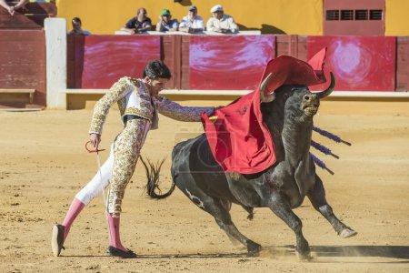 Alejandro Talavante fighting in Avila