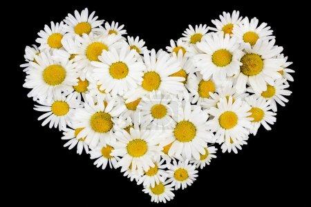 Beating real daisies heart