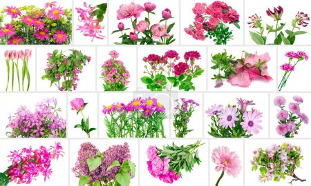Only pink flowers set