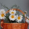 Bunch of daisies in a basket...