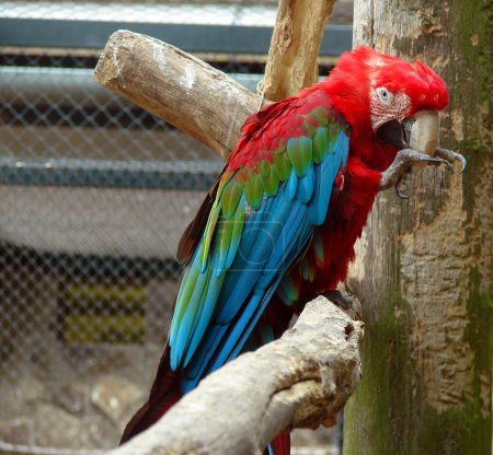 Photo for Colorful parrot - Royalty Free Image