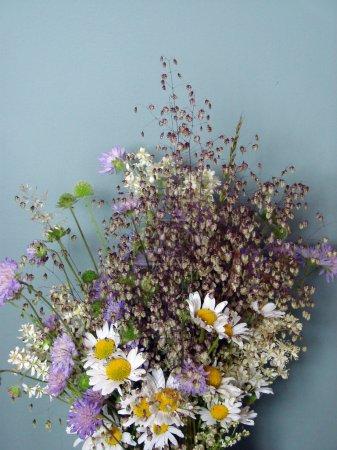 Foto de Flores de primavera hermosa, margaritas - Imagen libre de derechos