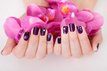 Photo pour Femme avec les ongles violets superbement entretenus tenant une poignée de pétales de fleur rose - image libre de droit