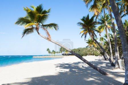 Palm Trees At Peaceful Beach