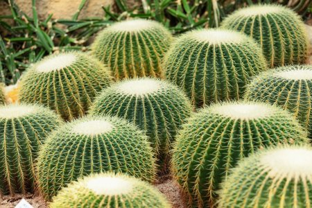 Photo for Cactus - Royalty Free Image