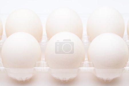 Foto de Huevo blanco en fila - Imagen libre de derechos