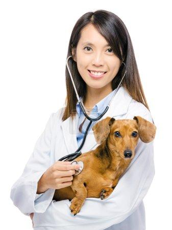 Veterinarian and dachshund dog