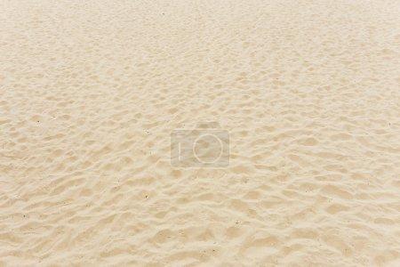 Photo pour Plage de sable - image libre de droit