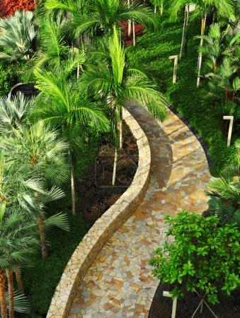 Photo pour Chemin de pierre dans le jardin de l'arbre vert - image libre de droit