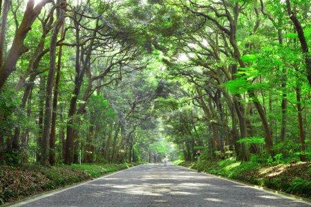 Foto de Camino en el bosque - Imagen libre de derechos