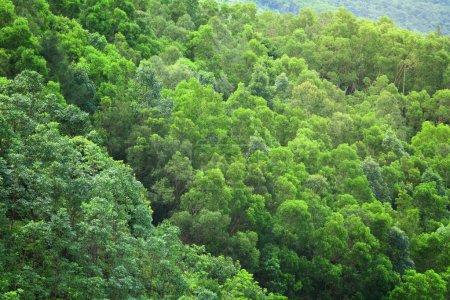 Photo pour Forêt de la vue de dessus - image libre de droit