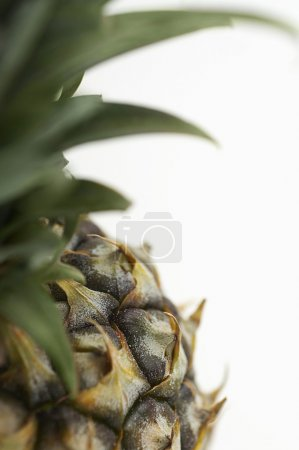 Photo for Cropped image of a fresh pineapple isolated over white background - Royalty Free Image