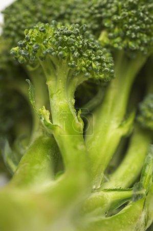 Photo for Organic green ripe broccoli - Royalty Free Image