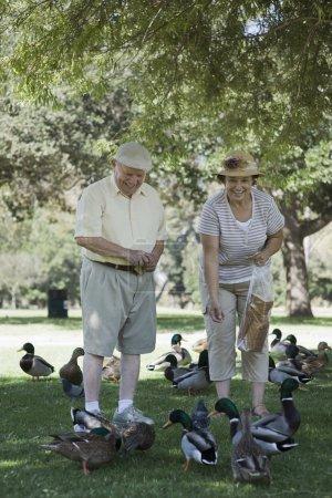 Happy senior couple feeding ducks