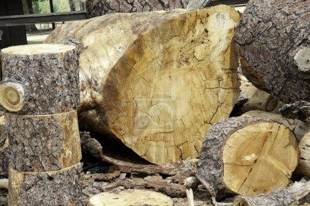 Photo pour Grumes de bois hachées - image libre de droit