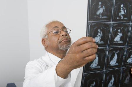 Senior Male Doctor Examining X-Ray In Clinic