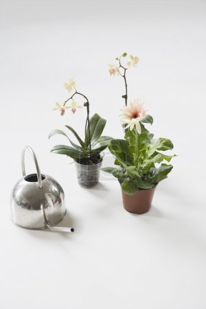 Potted Flower Plants And Watering Can