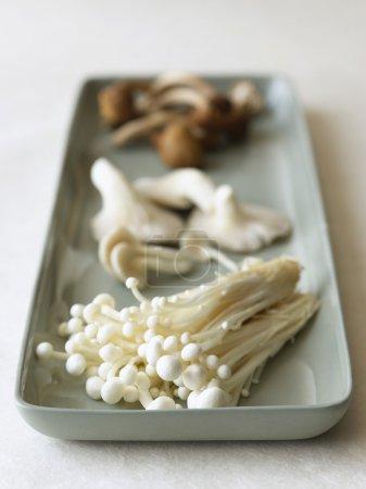 Photo pour Plateau avec groupe de champignons close up - image libre de droit