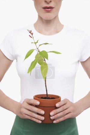 Photo pour Femme tenant la plante en pot demi-longueur cultivée - image libre de droit