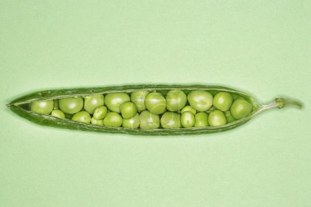 Photo for Open pea pod overhead - Royalty Free Image