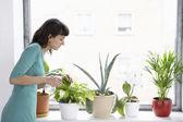 Businesswoman spraying pot plants