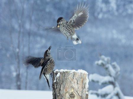 Photo pour Oiseaux en vol - image libre de droit