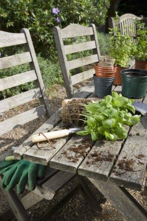 Materials for Potting Plants