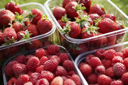 Strawberries and raspberries in plastic containers