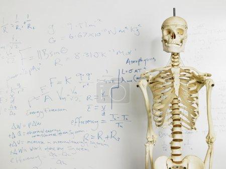 Skeleton in Front of Whiteboard
