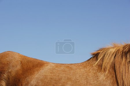 Horse against blue sky