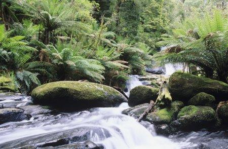 Stream in rainforest