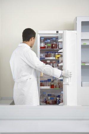 Scientist looking in refrigerator